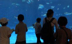 【鹿児島市の放課後等デイサービスWillGoの課外活動】鹿児島水族館に行きました。