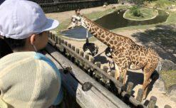 【鹿児島市の放課後等デイサービスWillGoの課外活動】平川動物公園に行きました。